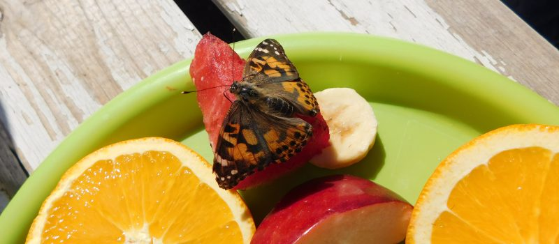 Metamorphosis: Our Butterfly Project
